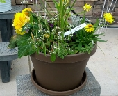 Brown poly Planter! in York PA, Lincolnway Flower Shop & Greenhouses