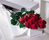 Romancing with Roses in North York ON, Ivy Leaf Designs