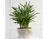The FTD� Deeply Adored� Palm Planter in San Clemente CA, Beach City Florist