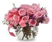 Unprecedented (Two Dozen Roses) in Oklahoma City, Oklahoma, Trochta's