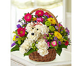 a-DOG-able� in a Basket in Richmond VA, Flowerama