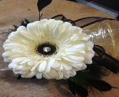 White Gerbera Corsage in Guilford, Connecticut, Guilford White House Florist