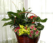 Anthurium Garden in Longview, Texas, Casa Flora Flower Shop