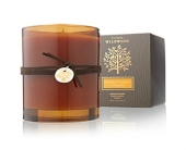Thymes limited Brandied pumpkin and Chestnut poure in Bellevue WA, CITY FLOWERS, INC.