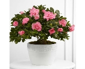 The FTD� Vibrant Sympathy� Planter in San Clemente CA, Beach City Florist