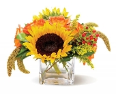 Country Sunflowers in Highlands Ranch CO, TD Florist Designs