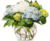 Mighty Hydrangea in Prospect KY, Country Garden Florist