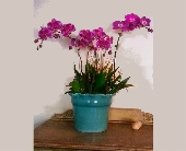 Garden Forever in Orinda, California, Misaghi Design Orinda Florist