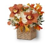 Montville Flowers - Autumnal Orchids - Petals Of Pine Brook