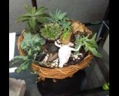 Dry Bones Succulent Garden