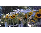 Wedding in Davis, California, Strelitzia Flower Company