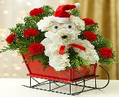 1800- One Dog, Open Sleigh in Woodbridge VA, Lake Ridge Florist