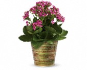 Simply Happy Kalanchoe Plant by Teleflora in Ruston LA, 2 Crazy Girls