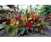 Fall Protea in Boulder CO, Sturtz & Copeland Florist & Greenhouses