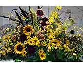 Golden Field in Boulder CO, Sturtz & Copeland Florist & Greenhouses