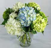 HEAVENLY HYDRANGEA by Rubrums in Ossining NY, Rubrums Florist Ltd.