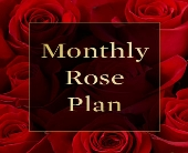 Rose of the Month in High Ridge MO, Stems by Stacy
