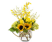 Carmel Mountain Flowers - Orchid  Rays - Poway Country Florist