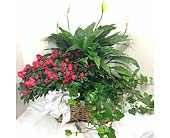 Large Planter Basket in Kennesaw GA, Kennesaw Florist