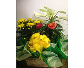 Living Blooming Basket in Portsmouth, Ohio, Kirby's Flowers