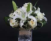 White Classic Dazzler in Kingston, Ontario, Pam's Flower Garden