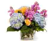 Austin Flowers - Colorful cube - Freytag's Northwest Florist