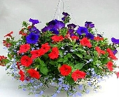 Outdoor Hanging Basket in Utica NY, Chester's Flower Shop And Greenhouses