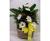 MEDIUM BASKET DISH GARDEN WITH FRESH in Titusville FL, Floral Creations By Dawn