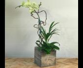 Orchid Garden - Natural Wood Container in Santa Cruz, California, Ferrari Florist