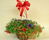Deluxe Hanging Planter in Utica NY, Chester's Flower Shop And Greenhouses