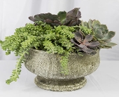 Succulent Pot in Santa Clarita CA, Celebrate Flowers and Invitations