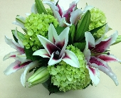 Lilies and Hydrangea in Palm Beach Gardens, Florida, Floral Gardens & Gifts