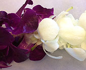 Purple, White - Double Lei in Sunnyvale CA, Flowers By Sophia