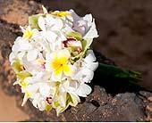 Wedding Bouquet in Kihei, Hawaii, Kihei-Wailea Flowers By Cora