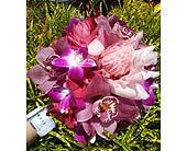 Passionate in Maui in Kihei, Hawaii, Kihei-Wailea Flowers By Cora