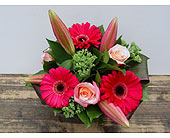 Pretty as Punch in North Vancouver BC, Special Moments Flowers And Gifts