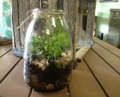 Honey Jar Terrarium in Littleton, Colorado, Autumn Flourish