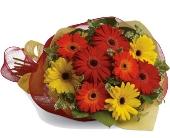 Cut Gerbera Flowers