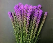 LIATRIS in Edmonton AB, Petals For Less Ltd.