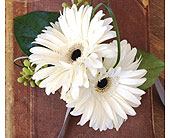 Two gerbera daisy Wristlet in Ammon ID, Petal Passion