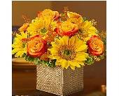 Modern Enchantment� for Fall in Watertown CT, Agnew Florist