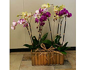 Orchid Surprise in Katy TX, Kay-Tee Florist on Mason Road