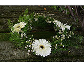 Daisy Wreath in Indianapolis IN, Gillespie Florists