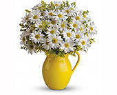 Sunny Day Pitcher of Daisies in Smyrna GA, Floral Creations Florist