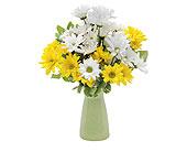 Des Peres Flowers - Daisy Craisy - Bozzay Florists