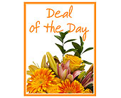 Deal of the Day in Methuen MA, Martins Flowers & Gifts