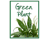 Green Plant Deal of the Day in Prospect KY, Country Garden Florist