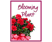 Blooming Plant Deal of the Day in Prospect KY, Country Garden Florist