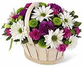 A Basket of Beauty in Agassiz BC, Holly Tree Florist & Gifts