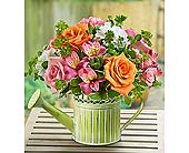 Shower Me with Flowers in Aston PA, Wise Originals Florists & Gifts